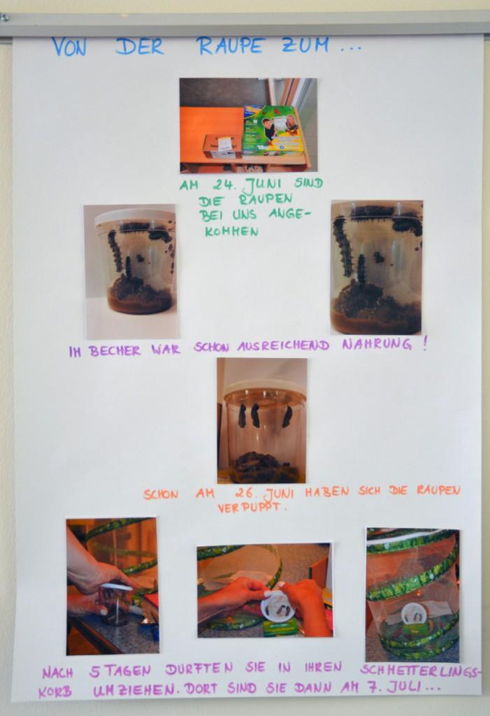 Schmetterlingsprojekt der Kita Flurspatz in Lurup,  2. Plakat